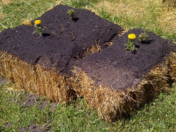 Pin by cool springs press on straw bale gardening pinterest for Straw bale gardening techniques