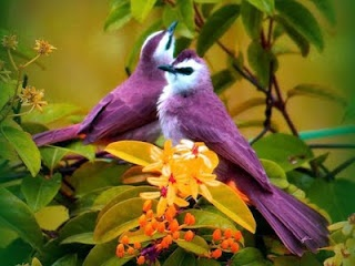 Leads to a blog with lots of pretty purple birds.