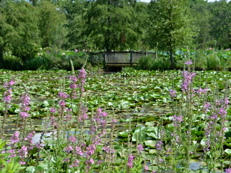 Kenilworth Park Aquatic Gardens Dc Things To Eat And Touch Pint