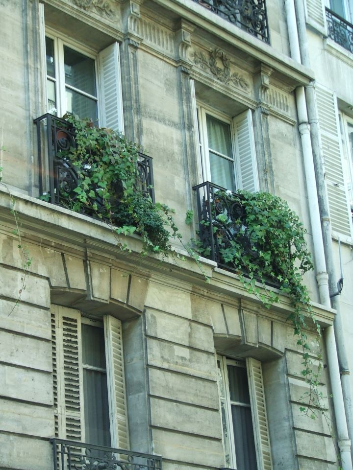 French Country Paris Window Boxes French Country
