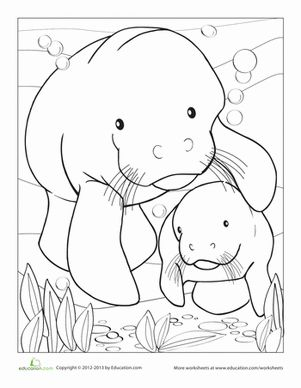 Cute Manatee Coloring Page Coloring Pages Manatee Coloring Page