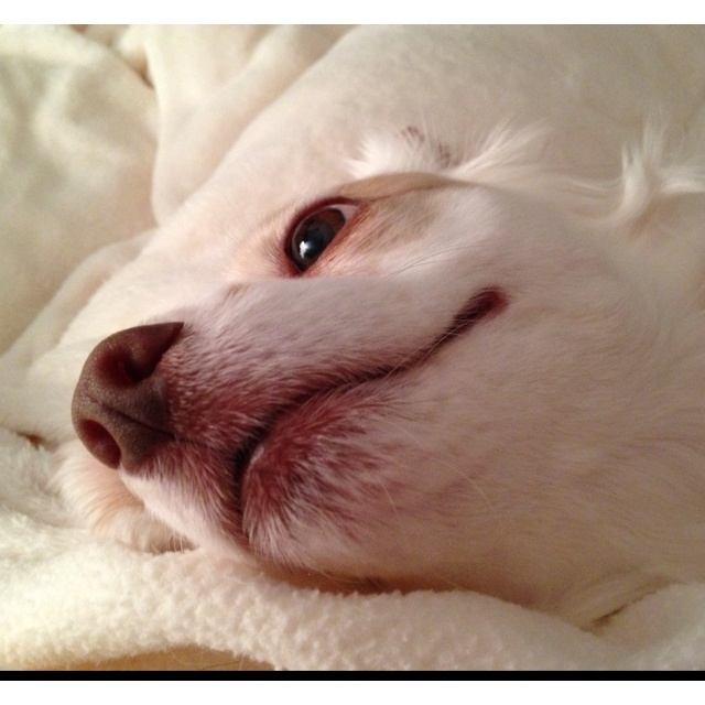 The World S Prettiest Dog