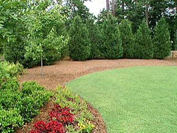 Staggered tree line for privacy  Garden and Landscape  Pinterest