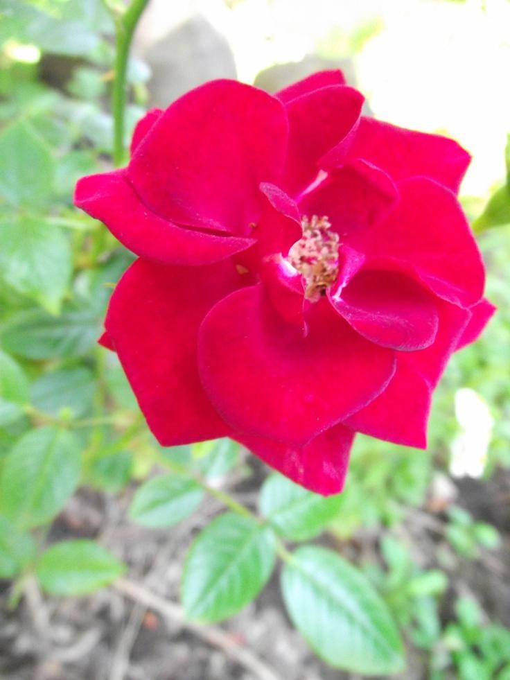 jennifer rose