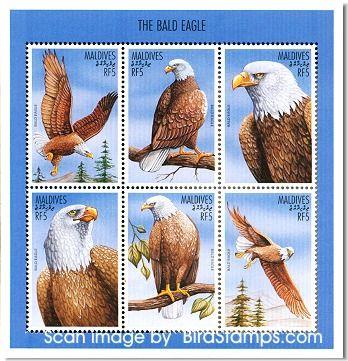 maldives the bald eagle birds in all their splendor flying high ...