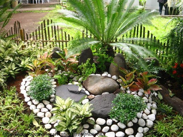 Backyard Bamboo Garden Ideas : Found on backyardgardeningadventureswordpresscom