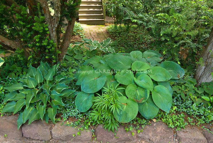 Pin by lucie prenevost on plantation pinterest for Landscaping ground cover plants