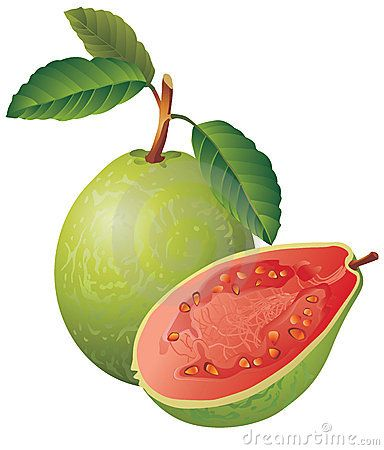 succulent clip art - Bing Images | CUCINA - fruit and vegetables | Pi ...