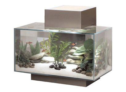Modern fish tank design pinterest for Modern fish tanks