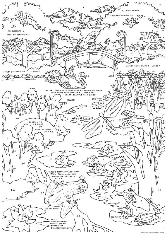 Free Coloring Pages Pond Animals : Pond life free colouring pages