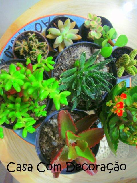 mini jardim suculentas:mini jardim de suculentas