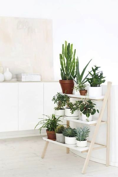 plantes d int rieur for the home pinterest