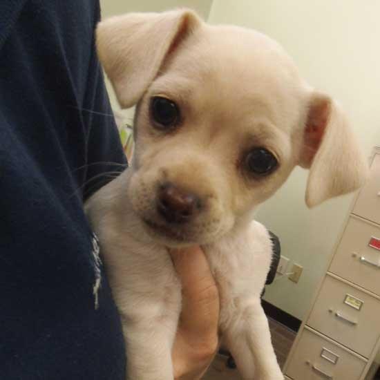 dog adoption san diego   adopt a dog cat adoption san diego   adopt