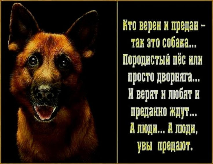 Стих про собак и преданность