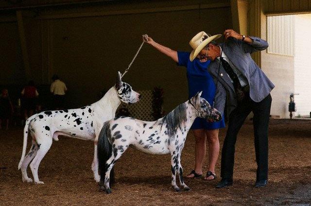 Dog as big as a horse!   Animals   Pinterest