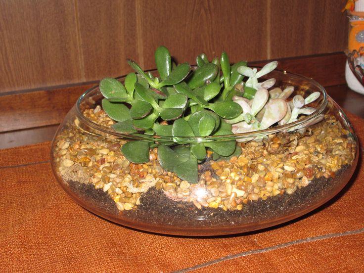 Succulents cool house plants pinterest - Cool succulent plants ...