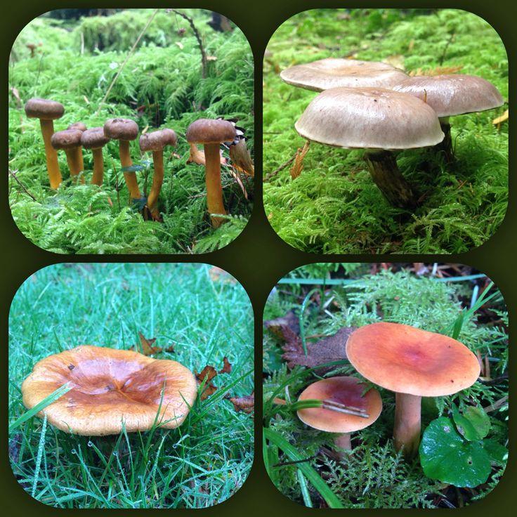Mushroom Varieties Pacific Northwest Native Plants