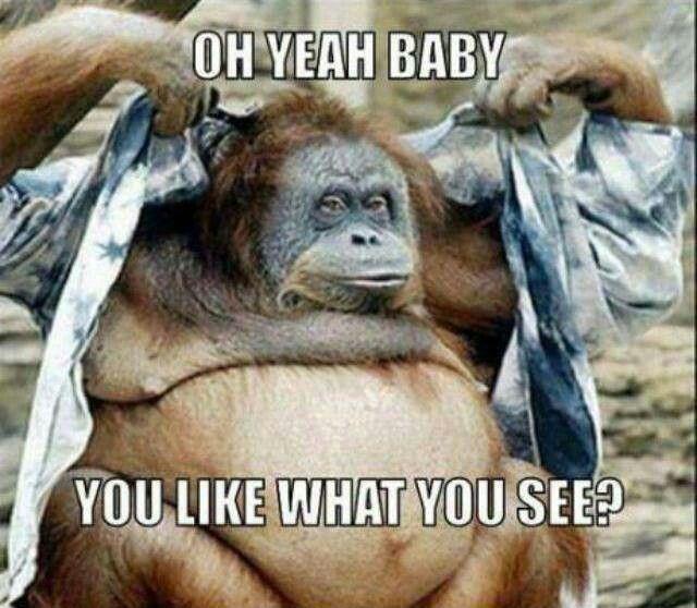 Funny orangutan meme