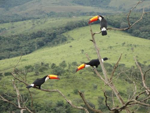 Tucanos na Serra da Canastra.   Cool animals   Pinterest