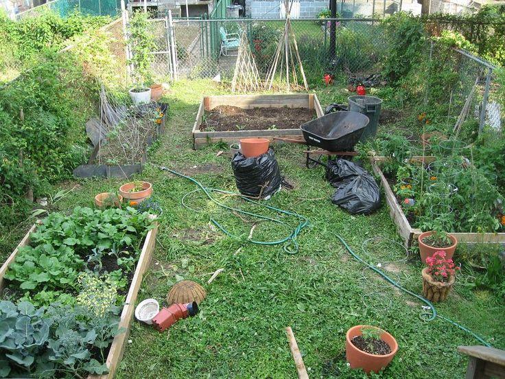 Back Yard Organic Gardening