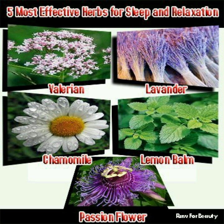herbs that help you relax
