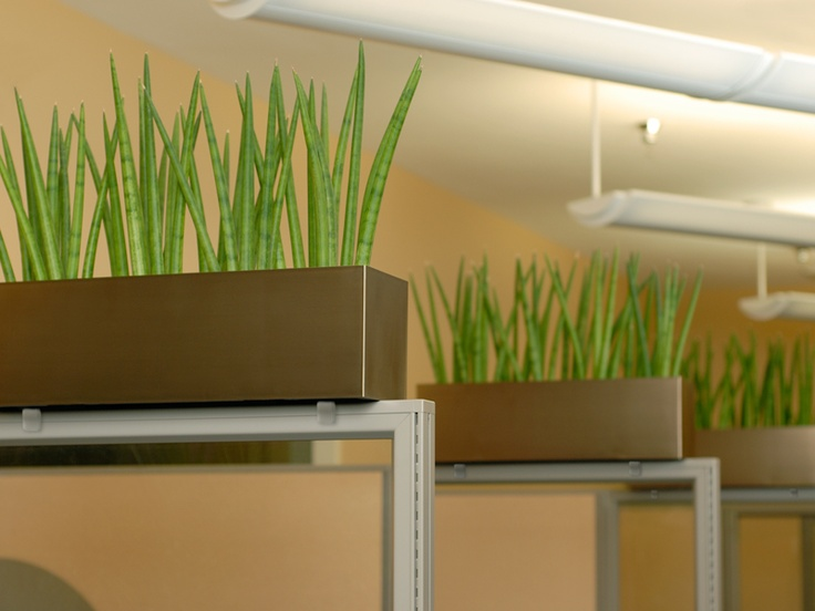office cubicle planters planters pinterest