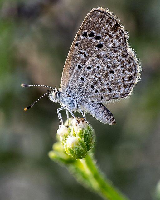 Butterfly Macro | Fa