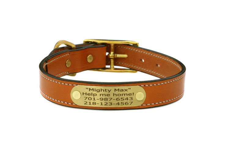 Personalized Name Plate Dog Collars