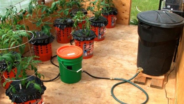 Self watering container garden system organic gardening pinterest - Diy self watering container garden ...