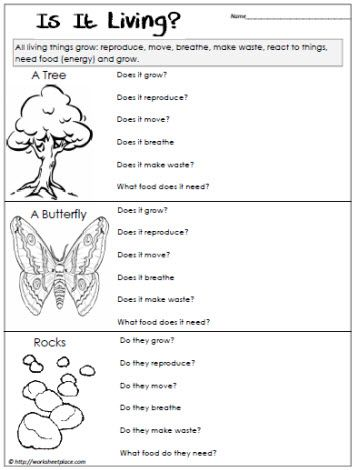 Classification of living things worksheet 8th grade