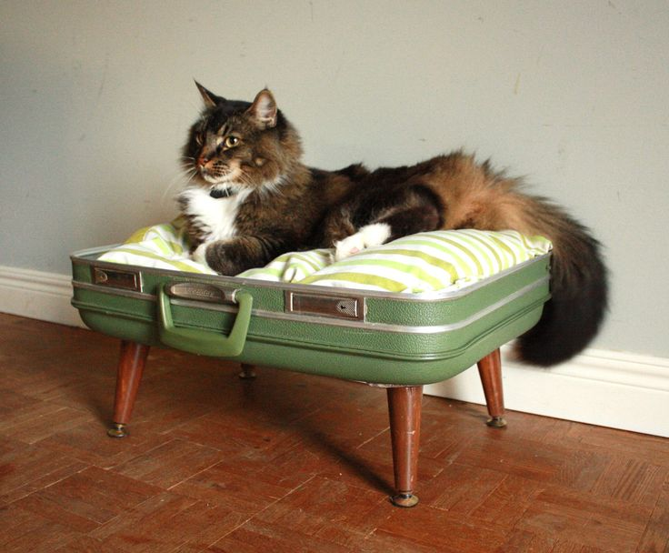 Cozy cargo suitcase pet bed green and brown upcycled for Homemade cat bed
