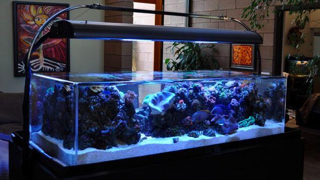 Fish tank dream home pinterest for Dream of fish tank