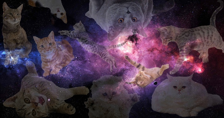 Galaxy Cat Background Tumblr Cats Tumblr Galaxy Background