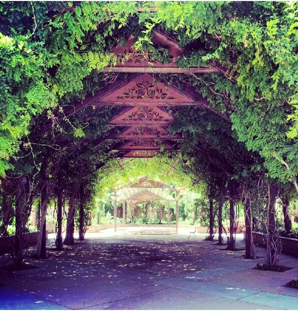 Pin by christina sharp on wedding 2014 pinterest for Botanical gardens albuquerque new mexico