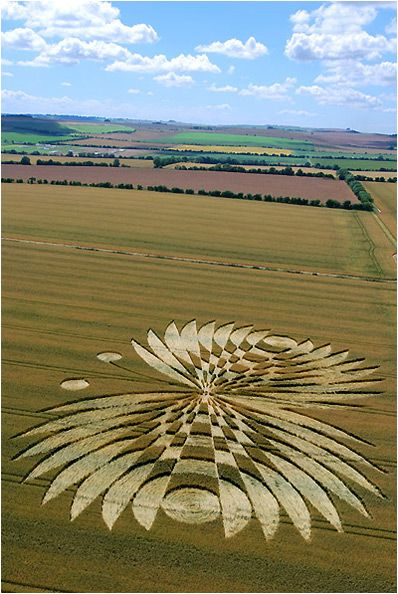 Hailey Wood Away from the usual crop circle haunts in Wiltshire this design appreared in mid July near Ashbury, Oxfordshire. It's been dubbed the 'Butterfly Effect' for obvious reasons.