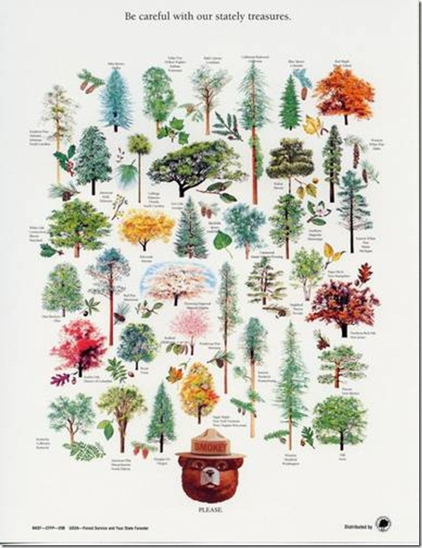 Old smokey bear poster w state trees