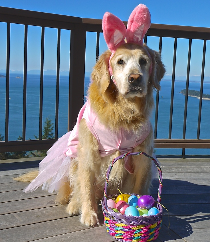 Sophie the Easter Dog