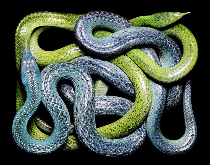Cool photos from Guido Mocafico & his Serpents book