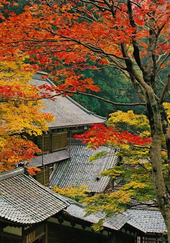 Fukui Japan  city photos gallery : Fukui, Japan | Japan that I love | Pinterest
