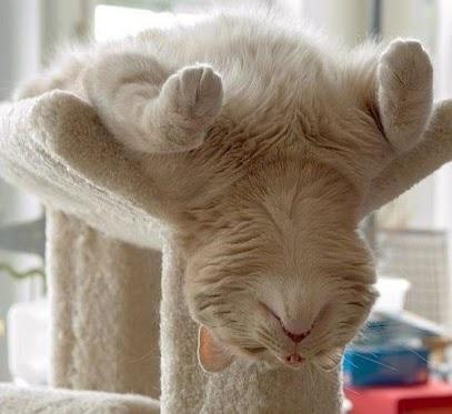 "Chillax cat doing kitty yoga-ahhhh-""Breathe"""