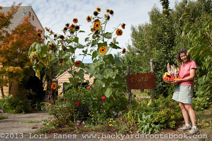 Backyard Permaculture Book : Tabor Tilth Connie Van Dybes Permaculture urban farm