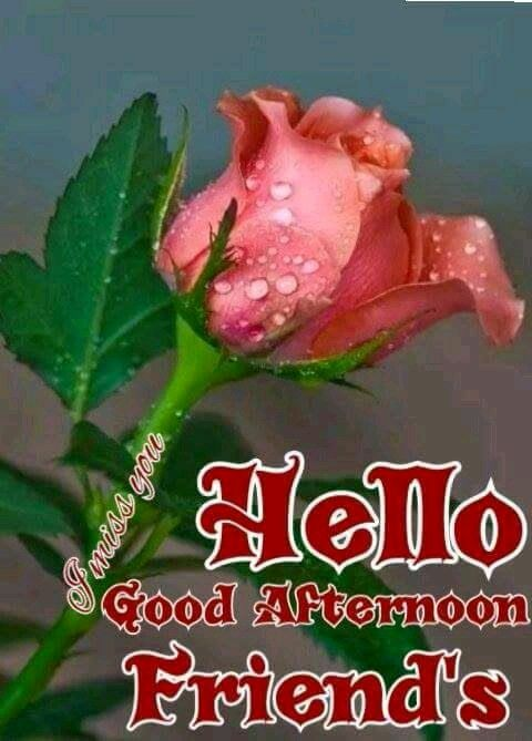 hello good afternoon friends pictures photos and images