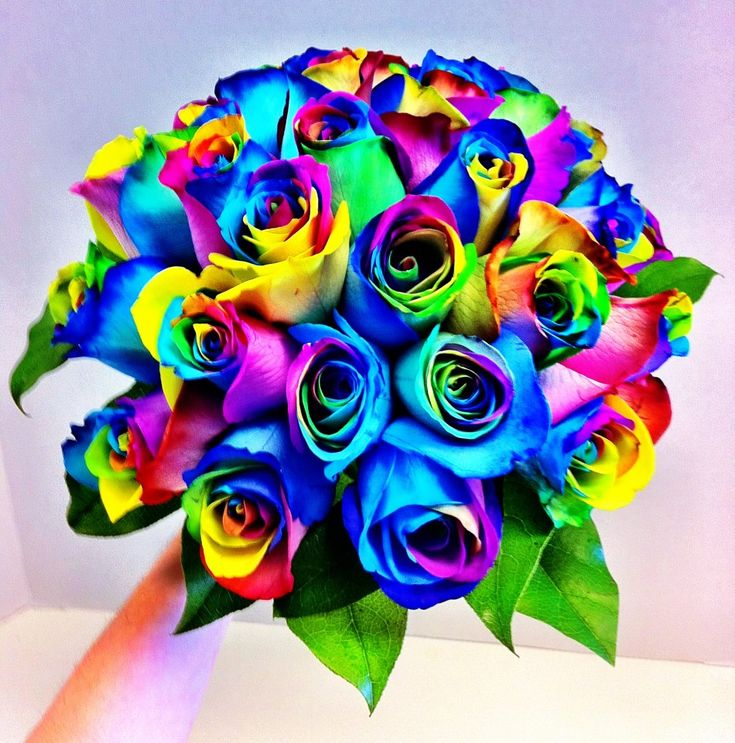 Wedding Bouquets With Rainbow Roses : Pin by grower direct fresh cut flowers on roses