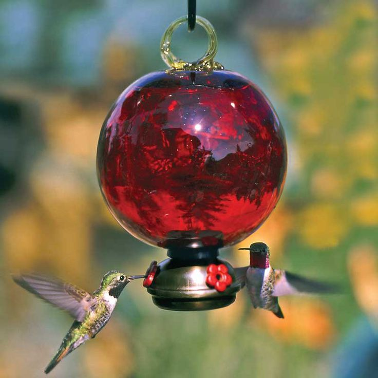 ruby red humming birds Ruby red hummingbird feeder this is pretty $3695 pretty shape in a garden.