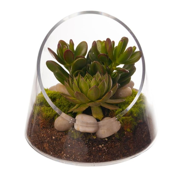 glass terrarium snow bunny i am pinterest. Black Bedroom Furniture Sets. Home Design Ideas