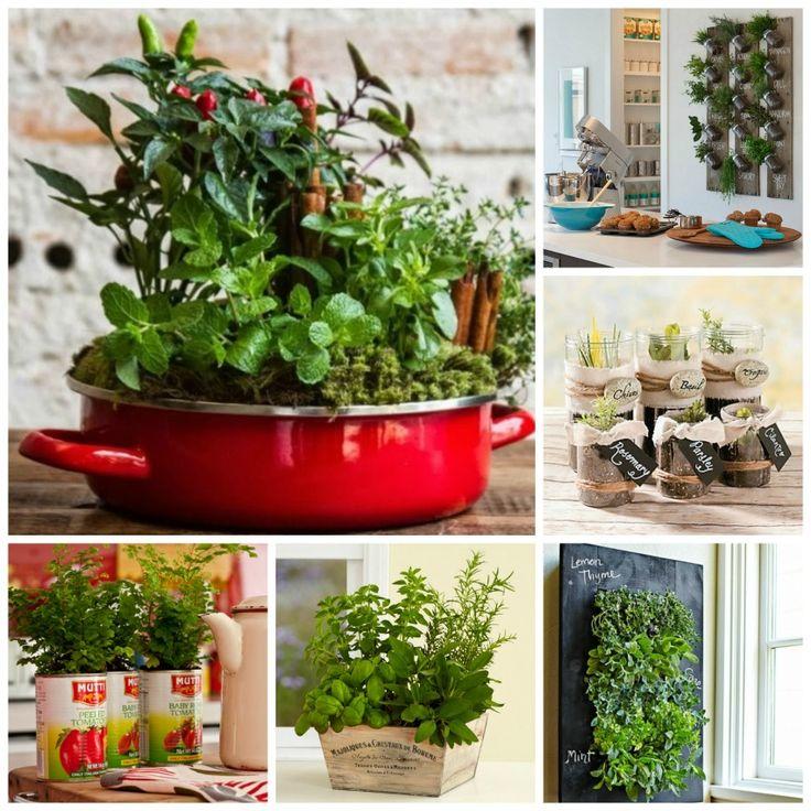 Como plantar [horta em casa] Horta em casa Pinterest