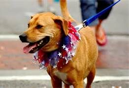 fourth of july dog images