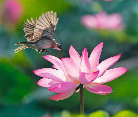 Image result for birds in flowers