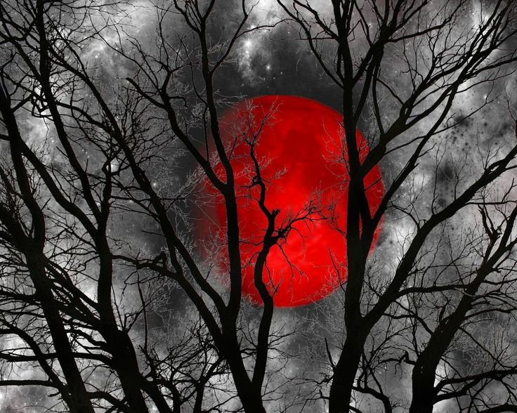 Black White Red Moon Tree Wall Art Home Decor Matted Pictre