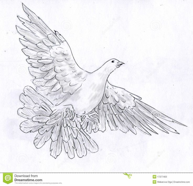 flying dove pencil drawing - photo #5